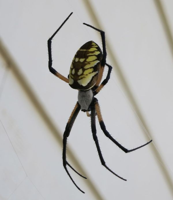 2013-08-05 Spider 01.png