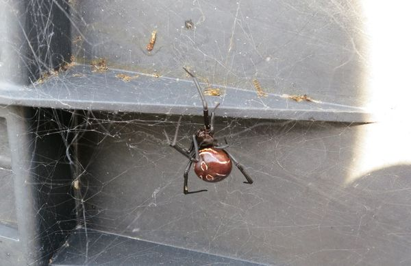 2013-08-11 BlackWidow 01.png